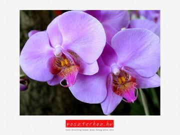 Így fotózd az orchideád - Orchidea 2