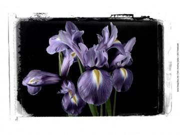 magyar fotográfia napja - flower iris