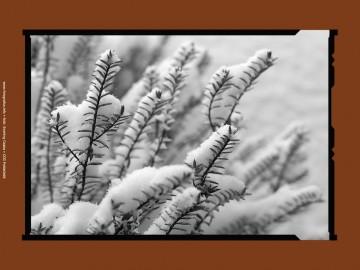 Tájfotózás tippek - Havazás 03