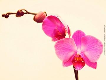 Virágcsokor kompozíció - Orchidea Purple
