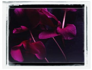 Virágcsokros képek 02