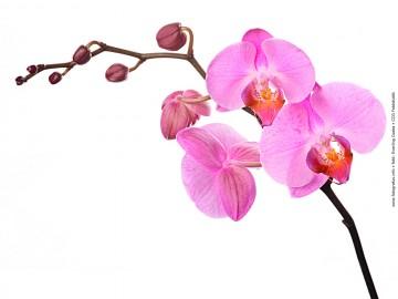 Nőnapi üdvözlet - Orchidea 01