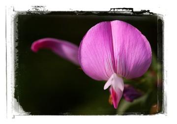 Virágképek 01