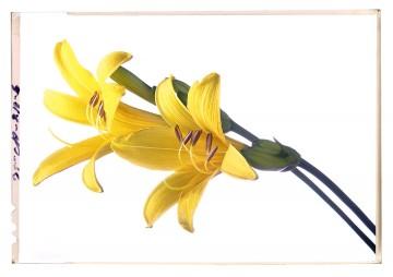 virág képek a fehér árnyalatai liliom poster 1