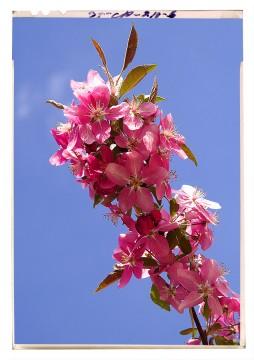 virágfotózás flower blossom poster 2