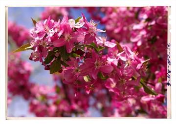 virágfotózás flower blossom poster 1