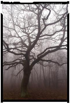 túrázás pilisben fotósvilág