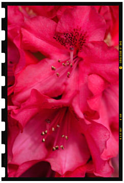 virág fotózás fotóstúdióban 2