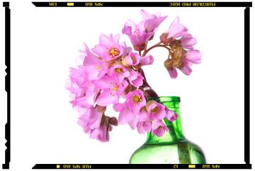 tavaszi virágok bőrlevél 2