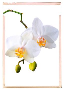 orchidea fajták - fotó kiállítás 02